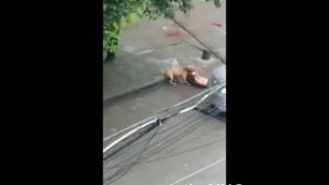 Man Attacked By Pitbull